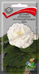Бегония клубневая крупноцветковая Белая в упаковке 5шт арт738457