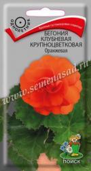 Бегония клубневая крупноцветковая Оранжевая в упаковке 5шт арт738459
