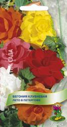 Бегония клубневая Лето в Петергофе в упаковке 15шт арт160811