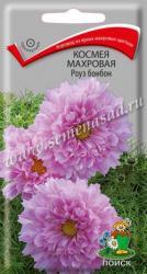 Космея махровая Роуз бонбон в упаковке 0.1гр арт300624