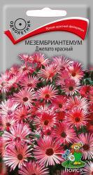 Мезембриантемум Джелато красный в упаковке 20шт арт689234